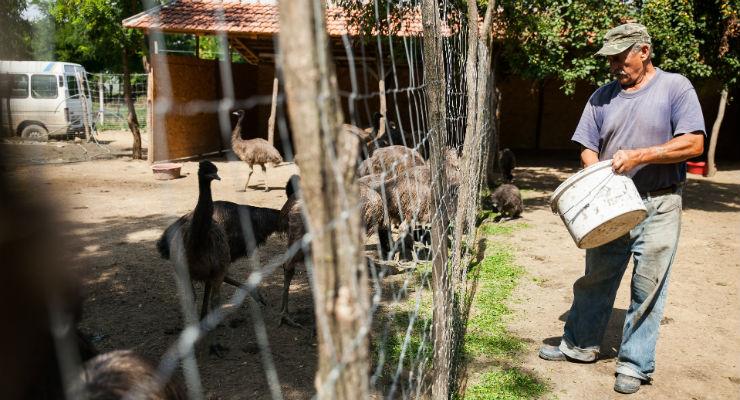 Fürjek, galambok, emuk húsából tartják el az ároksepregetőket